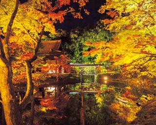 秋のライトアップでは、臥龍廊から眺める臥龍池や観月台から眺める偃月池に、紅葉が鏡のように水面に映り込む/高台寺