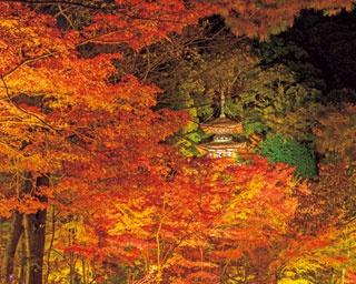 モミジと建築美が織り成す幻想の世界!深紅に染まる秋の永観堂