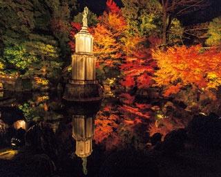 池に映る紅葉と像の景色が見事!/知恩院