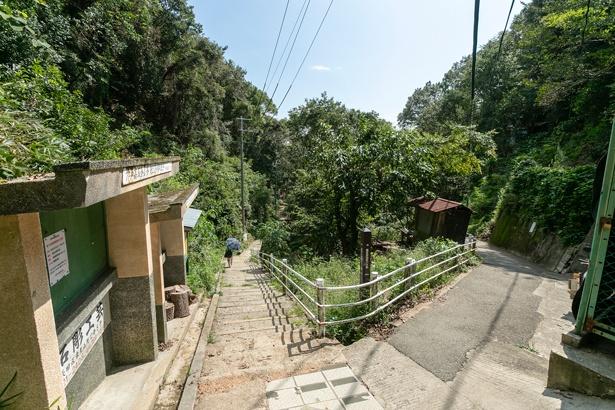 月見茶屋からの下山ルートは舗装された階段なので歩きやすい。長田へは分岐を直進し南へ