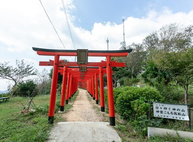 社殿の東には朱色が映える鳥居が何本もつらなる。その景観は見応えあり