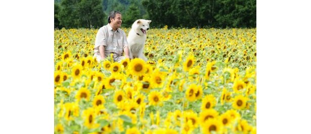 40万本が咲き誇るひまわり畑にてクランクイン