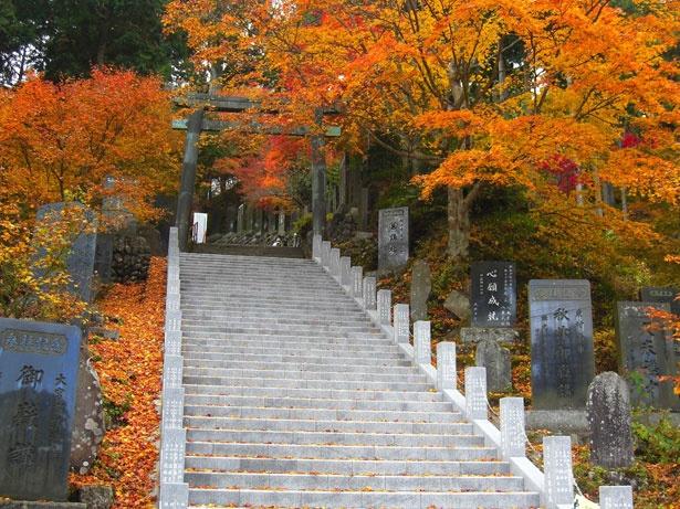 紅葉の時期にはモミジが色付き、武蔵御嶽神社に向かう参道が美しく彩られる