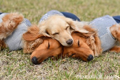 気持ち良さそうに眠るわんこたち。下の子たちはいい夢見れてるかな?