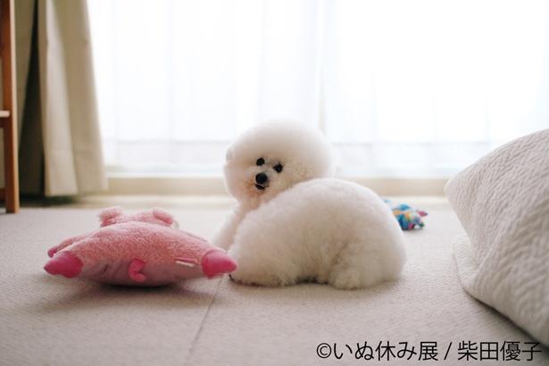 【写真を見る】モフモフの毛並みが最高にかわいい!抱き枕にしたい……