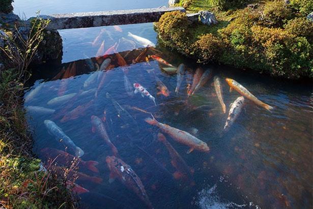 曹源池と呼ばれる池泉を中心とした回遊式庭園/天龍寺