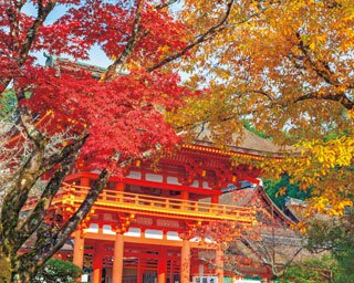 朱色の桜門ともみじの紅が華やか/上賀茂神社