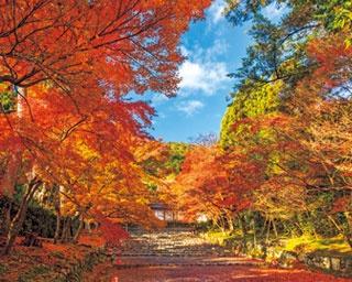 参道を覆う紅葉のアーチが見事!広大で美しい二尊院で感じる秋