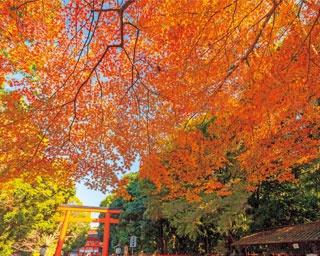 紅葉のトンネルを通って神社へ/下賀茂神社