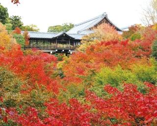 ほかにも洗玉澗や臥雲橋など見どころが多く、さまざまな位置から絶景を楽しめる/東福寺