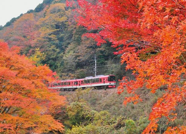 色とりどりに紅葉した山あいを走り抜ける展望列車きらら/叡山電車きらら (叡山電車鞍馬線)