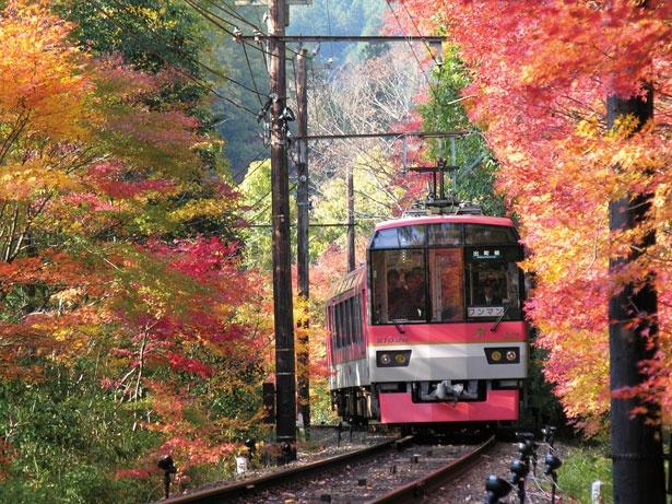 二ノ瀬駅~市原駅間の紅葉のトンネル/叡山電車きらら (叡山電車鞍馬線)