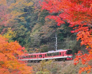 「もみじのトンネル」に感動!京都の紅葉を比叡電車で満喫しよう