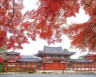 10円玉のデザインで有名な平等院鳳凰堂、紅葉越しの風景は格別!