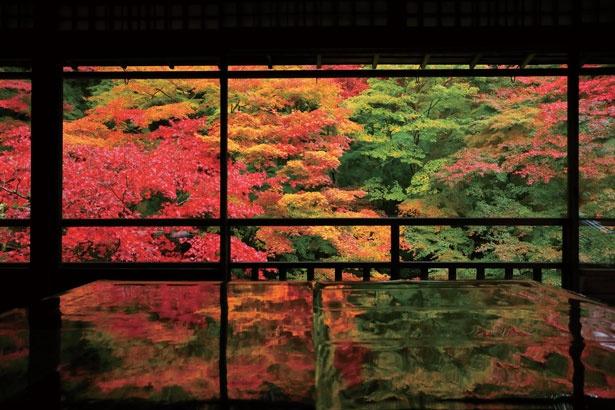 京都の紅葉&京グルメを大満喫!叡山電車「ひえい」で京の奥座敷へ贅沢さんぽ