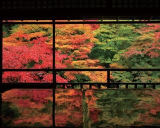 息をのむほど美しい書院の2階から眺める瑠璃の庭の紅葉/瑠璃光院