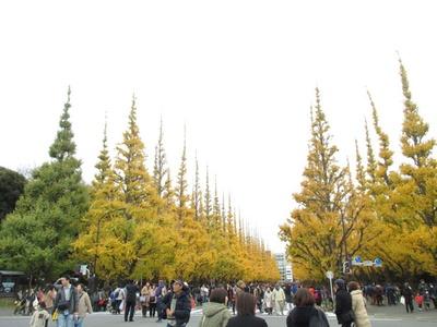 【写真を見る】明治神宮外苑全体で約180万人を超えるにぎわいを見せる「神宮外苑 いちょう祭り」
