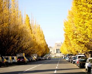 明治神宮外苑イチョウ並木の紅葉をチェック!都内屈指の黄葉スポット