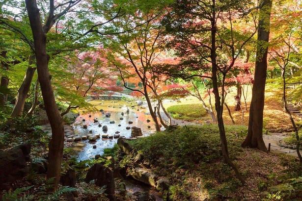 大堰川周辺は、小石川後楽園のなかでも特におすすめの紅葉スポット