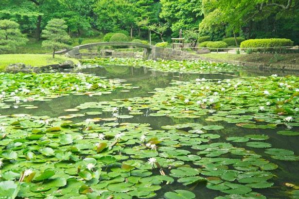 造られた江戸時代当時の姿をとどめている、風情あふれる庭園・内庭