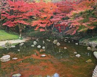 趣の異なる紅葉を堪能!小石川後楽園の見どころはココ