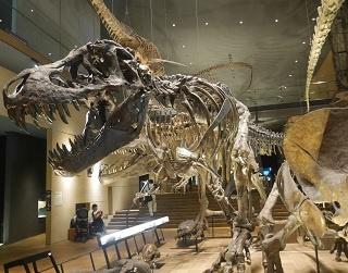 「旅好きが選ぶ!日本の博物館ランキング2018」が決定!トップ20には九州・沖縄からもランクイン