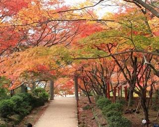 アクセス数の多いスポットをランキングで紹介!福岡の人気紅葉名所5選
