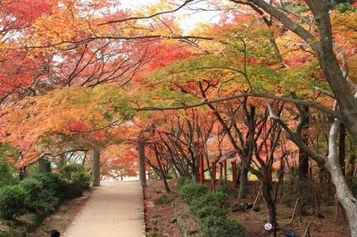 竈門神社(福岡県太宰府市) / 参道が紅葉のトンネルに