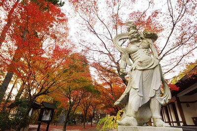 呑山観音寺(福岡県糟屋郡篠栗町) / 多種多様の木々が境内や参道を真っ赤に染める