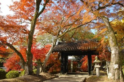 秋月城跡(福岡県朝倉市) / 秋に輝く筑前の小京都