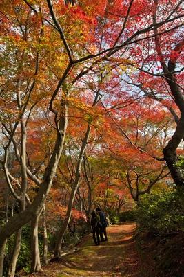 白野江植物公園(福岡県北九州市門司区) / 日本の原風景が広がる公園を錦絵のように染めるモミジ