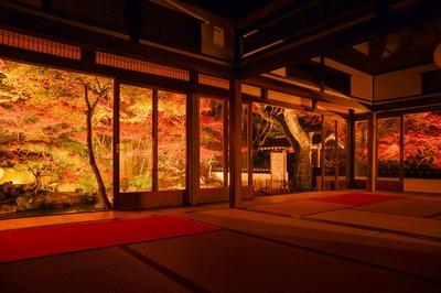 藤江氏魚楽園(福岡県田川郡川崎町) / 照明デザイナーが演出する幻想的な紅葉風景