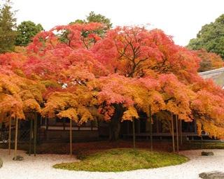 【写真特集】絶対行きたい!秋の極彩色に染まる福岡の人気紅葉スポット14選