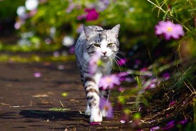 旅猫 ニャン吉の大冒険 / コスモス畑