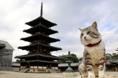 旅猫 ニャン吉の大冒険 / 奈良県・法隆寺