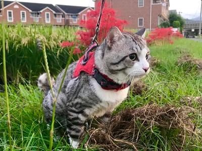 旅猫 ニャン吉の大冒険 / 彼岸花と一緒に