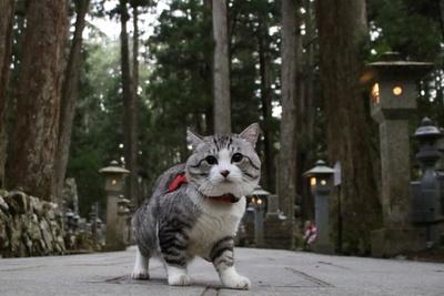 旅猫 ニャン吉の大冒険 / 和歌山県・高野山「奥之院」