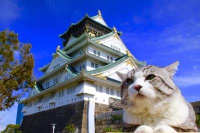 旅猫 ニャン吉の大冒険 / 大阪府・大阪城