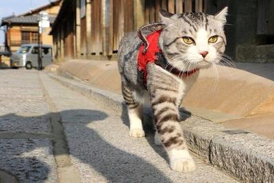 旅猫 ニャン吉の大冒険 / 京都府・八坂通