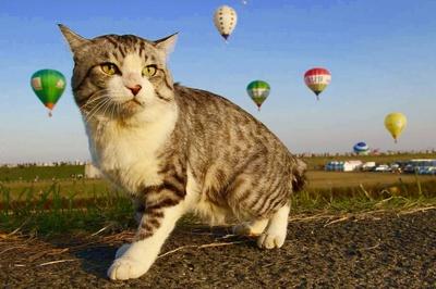 旅猫 ニャン吉の大冒険 / 佐賀県・バルーンフェスタ
