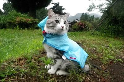 旅猫 ニャン吉の大冒険 / 熊本県・阿蘇