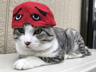 旅猫 ニャン吉の大冒険 / 福岡県