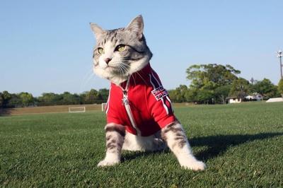 旅猫 ニャン吉の大冒険 / 宮崎県・綾町