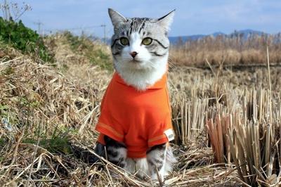 旅猫 ニャン吉の大冒険 / 鹿児島県