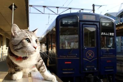 旅猫 ニャン吉の大冒険 / 鹿児島県・肥薩おれんじ鉄道
