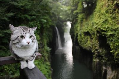 旅猫 ニャン吉の大冒険 / 宮崎県・高千穂峡