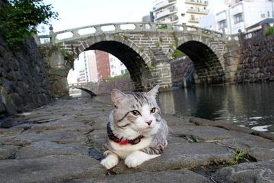 旅猫 ニャン吉の大冒険 / 長崎県・眼鏡橋