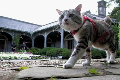 旅猫 ニャン吉の大冒険 / 長崎県・グラバー園