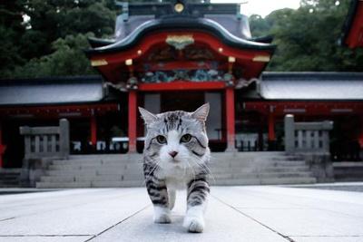 旅猫 ニャン吉の大冒険 / 鹿児島県・霧島神宮