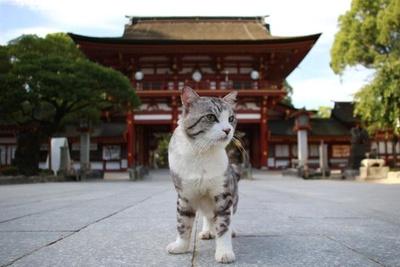 旅猫 ニャン吉の大冒険 / 福岡県・太宰府天満宮